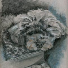 Portraits – Pets